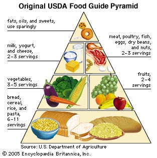 the Original Food pyramid is outdated